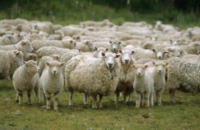Продължава изплащането на субсидиите за хуманно отношение към животните