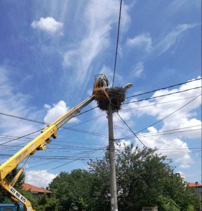 Акция по спасяване на бедстващи щъркели на гнездо в Пловдив