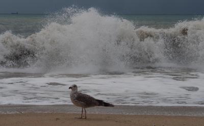 """Черно море е """"екологично неблагоприятно"""", според неправителствени организации"""