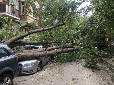 """След бурята: Клон се откъсна и удари човек на ул. """"Шипка"""", дърво се стовари върху автомобили на """"Хан Крум"""""""