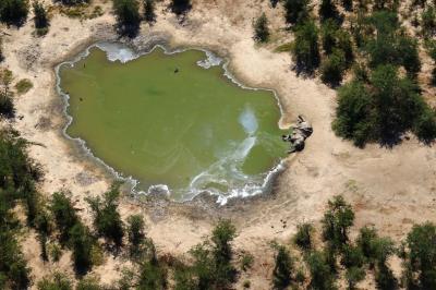 Остава загадка мистериозната смърт на стотици слонове в Ботсвана