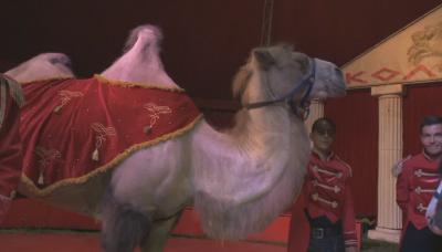 Може ли да се спаси цирковото изкуство?