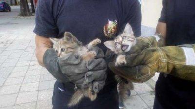 Добро дело: Пожарникари спасиха малки котета от удавяне