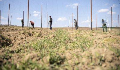 Зеленчукова ферма с български работници е новото огнище на коронавирус в Бавария