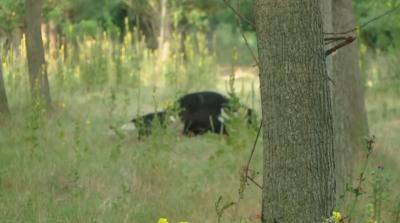 Екоминистърът: Ясно е веществото, което е отровило кравите край Димитровград