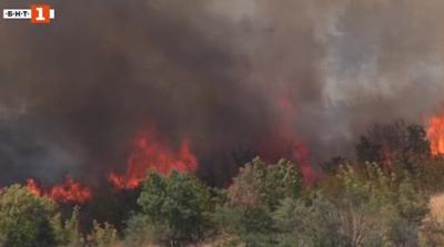 Голям пожар гори между харманлийските села Българин и Рогозиново