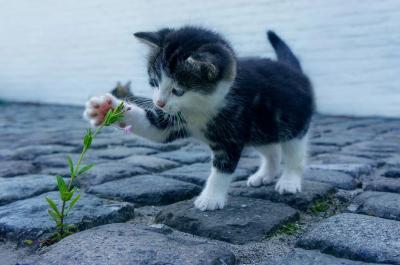 Днес отбелязваме Световния ден на котката