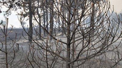 Локализиран е пожарът край Свиленград