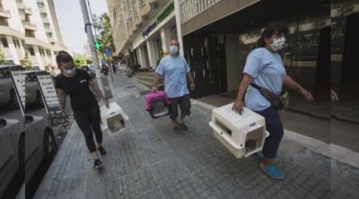 Българката Марина Иванова се грижи за бездомни животни след взрива в Бейрут