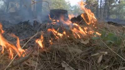 Локализираха горския пожар край Свиленград
