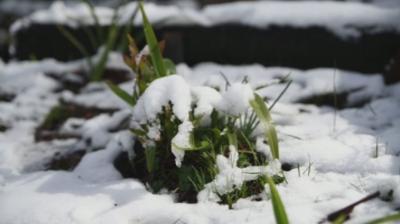 Сняг заваля в Австралия