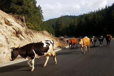 Отпускат 56 милиона лева на животновъди и земеделци с кредити