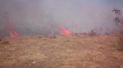 Подпалени сухи треви предизвикаха поредица от пожари Пловдивско