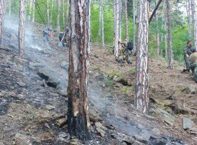 Пожарът край Карлово е локализиран