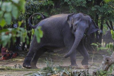 Шри Ланка забранява вноса на пластмасови изделия, за да защити слоновете