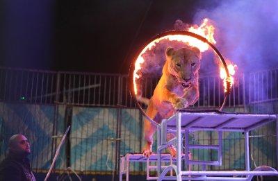 Франция забранява използването на диви животни в пътуващи циркове
