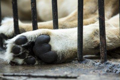 """""""Четири лапи"""" с международна петиция за условията в българските зоопаркове"""