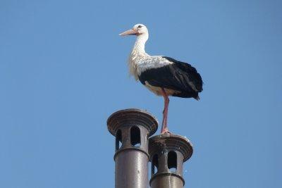 Този уикенд: Как се случва миграцията - вижте отблизо магията в света на птиците