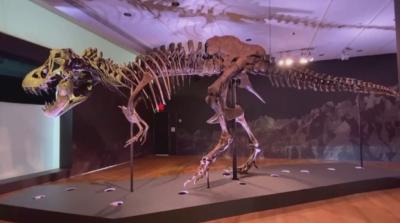 Продадоха динозавърски скелет за 28 милиона долара