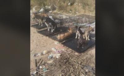 Спасиха кучета, изоставени в клетки на сметището в Самоков