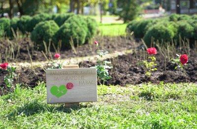 Засадиха 202 рози до НДК в подкрепа на донорството