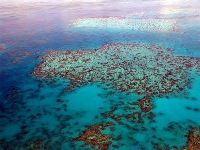 Големият бариерен риф е изгубил половината си корали