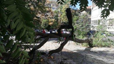 Дърво падна зад жилищен блок в Пловдив, нанесени са щети по автомобили