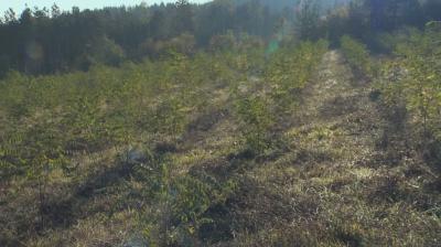 Над 80 000 дръвчета има в новата гора на София