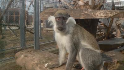 Заради съдебен спор зоопаркът в Пловдив остава затворен