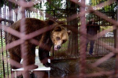 След година чакане: Мечокът Теди пристигна от Северна Македония в Белица
