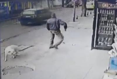 Задържаха мъж, нападнал с нож куче в столицата