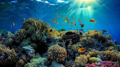 Големият бариерен риф вече е критично застрашен природен обект