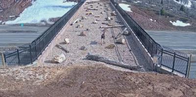 Мост над магистрала помага на дивите животни в щата Юта