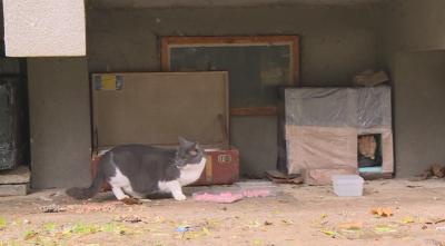 Русенци помагат на бездомни котки да оцелеят през зимата