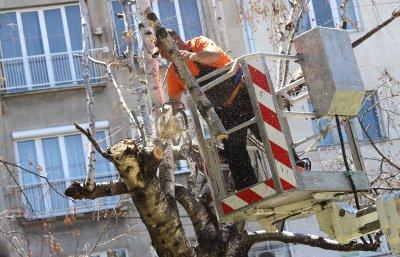 Сигнали за паднали клони и откъртени строителни огради заради силния вятър в София