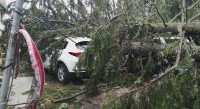 Заради бурния вятър: Паднали дървета затиснаха автомобили в Пампорово