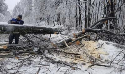 """Продължава разчистването на прохода """"Петрохан"""" от падналите дървета"""