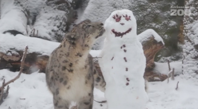 Как животните в зоопарк в Хелзинги реагират на снежен човек