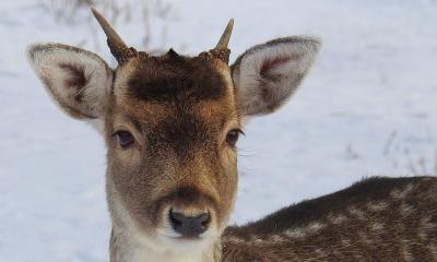 Хванаха бракониер, отстрелял сръндак в природния парк край Шумен