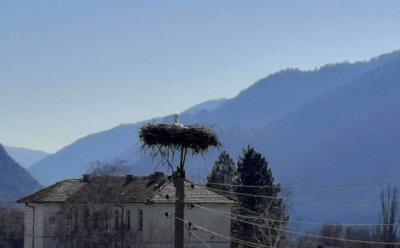 В село Полето посрещнаха първия щъркел