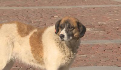 С около 30% са се увеличили изоставените кучета по време на пандемията