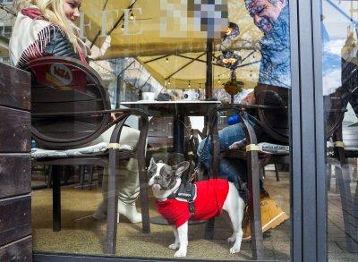 Най-нетърпеливите клиенти изпиха първото си кафе след отваряне на заведенията (Снимки)