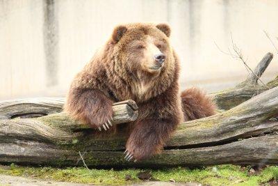Мечката Рони от столичния зоопарк се събуди от зимен сън