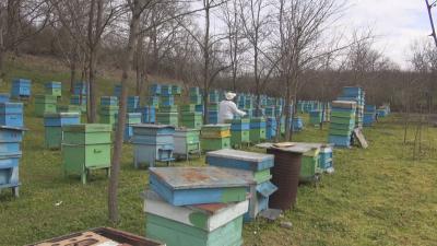 Масова смърт на пчели край Бургас, от БАБХ започнаха проверки