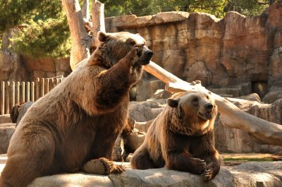 """""""Часът на Земята"""" тази година ще е посветен на мечките"""