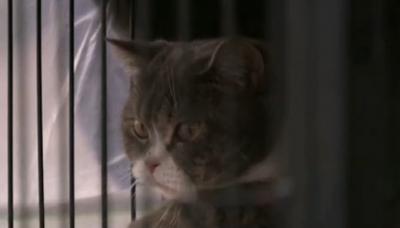 Конфискуваха котки, използвани за пране на пари в Тайланд