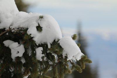 Силен снеговалеж спря автобус 66 до Алеко