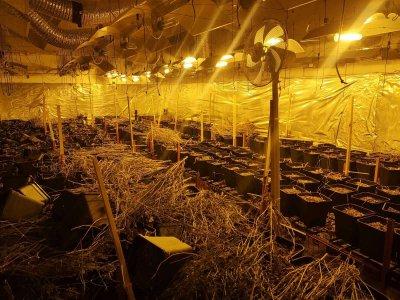 Разкриха две лаборатории за марихуана, задържани са четирима, други двама се издирват