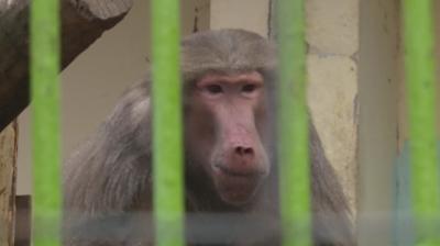 По-добри условия за животните в зоопарка в Благоевград