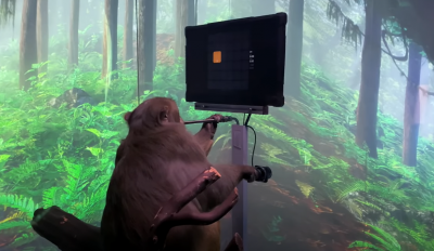 Мъск показа нов клип с маймуна, която играе компютърна игра (ВИДЕО)